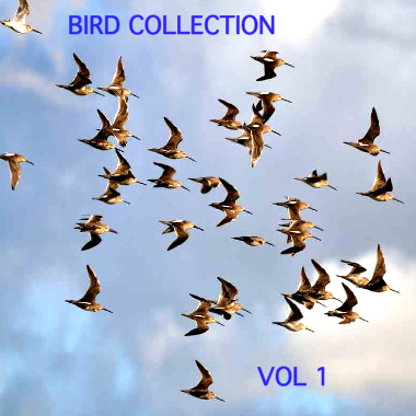 Bird Collection Vol 1