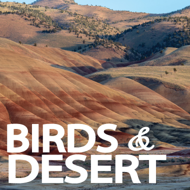 Wild West Birds and Desert